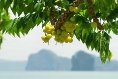 Phang Nga Bay - Fruits on the Rocks