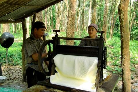 Koh Yao Noi - Rubber Plantation